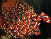 Reef Stew & More